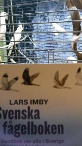 Svenska fågelboken i fågelsällskap